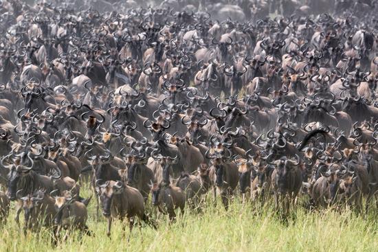 Kenya, Narok County-Nigel Pavitt-Photographic Print