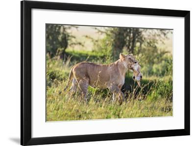 Kenya, Narok County-Nigel Pavitt-Framed Photographic Print