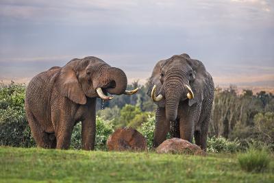 Kenya, Nyeri County-Nigel Pavitt-Photographic Print