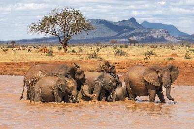 Kenya, Taita-Taveta County-Nigel Pavitt-Photographic Print