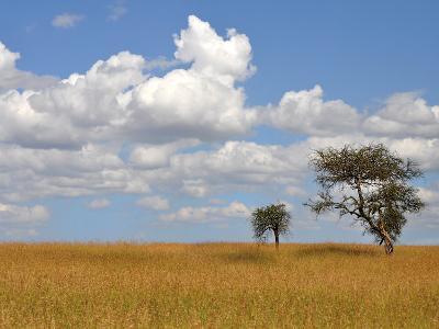Kenya Tree-Golie Miamee-Art Print