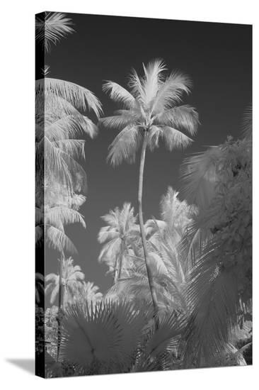 Kerala I-Bill Philip-Stretched Canvas Print