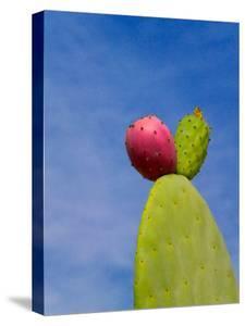 Cactus in the Desert, Peru by Keren Su