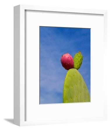 Cactus in the Desert, Peru