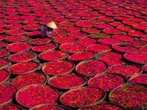 Lily Flowers and Pads, Inle Lake, Shan State, Myanmar-Keren Su-Photographic Print