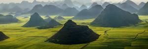 Canola Fields and Karst Hills in Mist by Keren Su