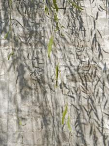 China, Beijing, Willow Tree Branches with Ancient Wall in Summer Palace by Keren Su