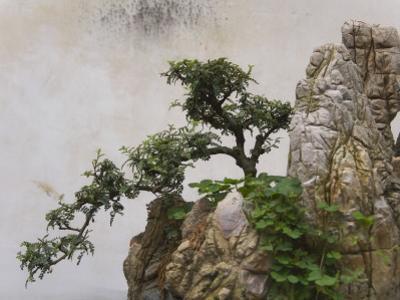 China, Yunnan Province, Bonsai, Potted Landscape by Keren Su