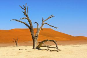 Dead acacia trees in Deadvlei, Sossusvlei, Namib-Naukluft National Park, southern Narim Desert by Keren Su