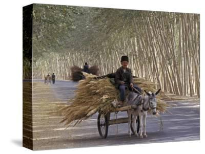 Donkey Cart, Turpan, Xinjiang Province, Silk Road, China