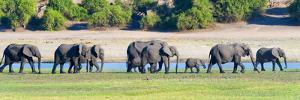 Elephant herd, Chobe National Park, North-West District, Botswana by Keren Su
