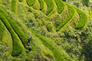Farmers on the Rice Terrace, Longsheng, Guangxi Province, China by Keren Su