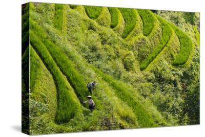 Farmers on the Rice Terrace, Longsheng, Guangxi Province, China