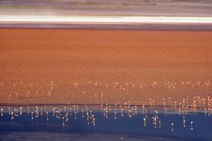 Flamingos in Laguna Colorada, Eduardo Abaroa Andean Fauna National Reserve, Bolivia by Keren Su