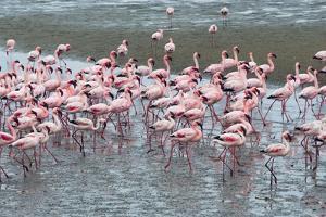 Flamingos, Walvis Bay, Erongo Region, Namibia by Keren Su