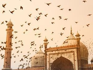 Flock of Birds Flying Around Jama Masjid Mosque by Keren Su