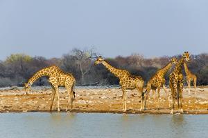 Giraffes by the river. Etosha National Park, Oshikoto Region, Namibia by Keren Su