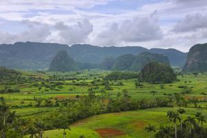 Limestone Hill, Farming Land in Vinales Valley, UNESCO World Heritage Site, Cuba by Keren Su