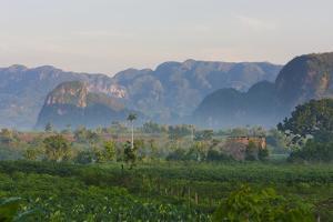 Limestone Hill, Farmland, Vinales Valley, UNESCO World Heritage Site, Cuba by Keren Su