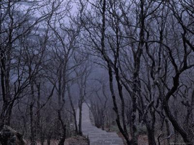 Mountain Forest Path, Mt. Huangshan (Yellow Mountain), China by Keren Su