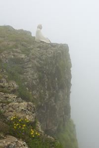 People on the cliff in morning mist, Simien Mountain, Ethiopia by Keren Su