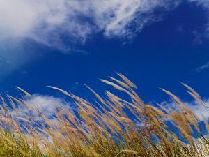 Rice Against Blue Sky in Metshina Village, Wangdi, Bhutan by Keren Su