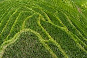 Rice terrace in the mountain, Longsheng, China by Keren Su