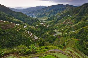 Rice Terraces, Agriculture, Philippine Cordilleras, Banaue, Ifugao, Philippines by Keren Su