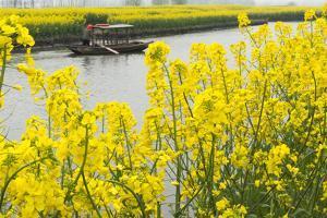 Rowing boat on river through Thousand-Islet canola flower fields, Xinghua, Jiangsu Province, China by Keren Su
