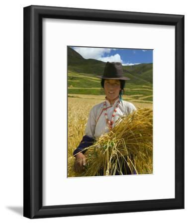 Tibetan Farmer Harvesting Barley, East Himalayas, Tibet, China