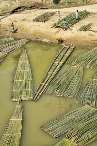 Transporting bamboo timber on the river, Chittagong Division, Bangladesh by Keren Su