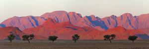 Tree with mountain in southern Namib Desert, Sesriem by Keren Su
