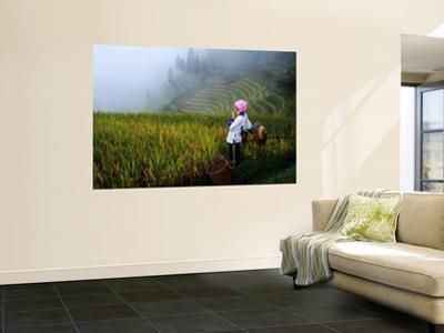 Zhuang Minority Girl in Terraced Rice Fields