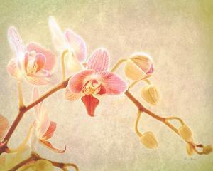 Keri Bevan Botanical Art Prints Paintings Posters Wall Art Art Com