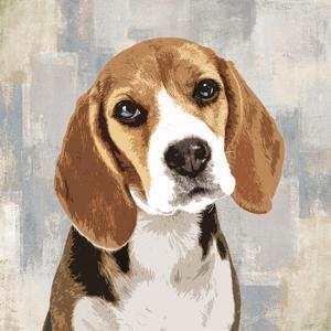 Beagle by Keri Rodgers