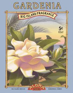 Gardenia by Kerne Erickson
