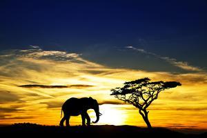 A Lone Elephant Africa by kesipun