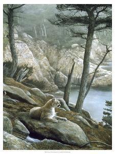 Cougar by Kevin Daniel