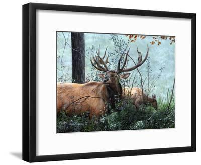 Elk Foraging
