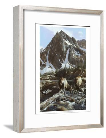Mountainside Elk II