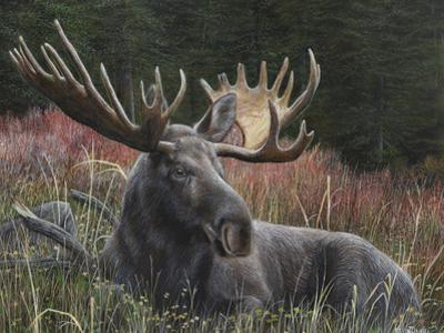 Recumbent Moose