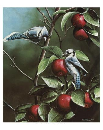 Summer Blue Jays by Kevin Daniel