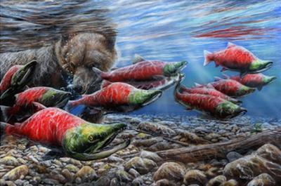 The Last Run - Sockeye Salmon