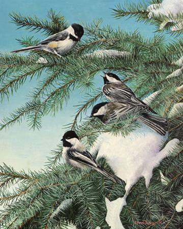 Winter Chicadees