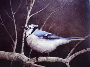 Blue Jay by Kevin Dodds