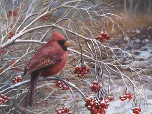 Cardinal and Berries by Kevin Dodds