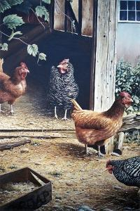Russell's chickens by Kevin Dodds