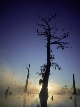Sunrise at the Alligator Bayou Swamp, Louisiana