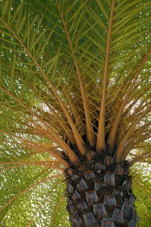 British Virgin Islands, Scrub Island. Close Up of the Underside of a Palm Tree by Kevin Oke