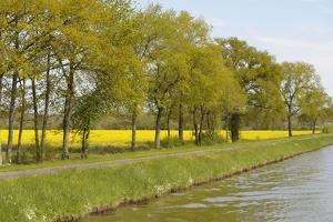 France, Loire. Mustard Fields Along the Banks of Canal Lateral by Kevin Oke